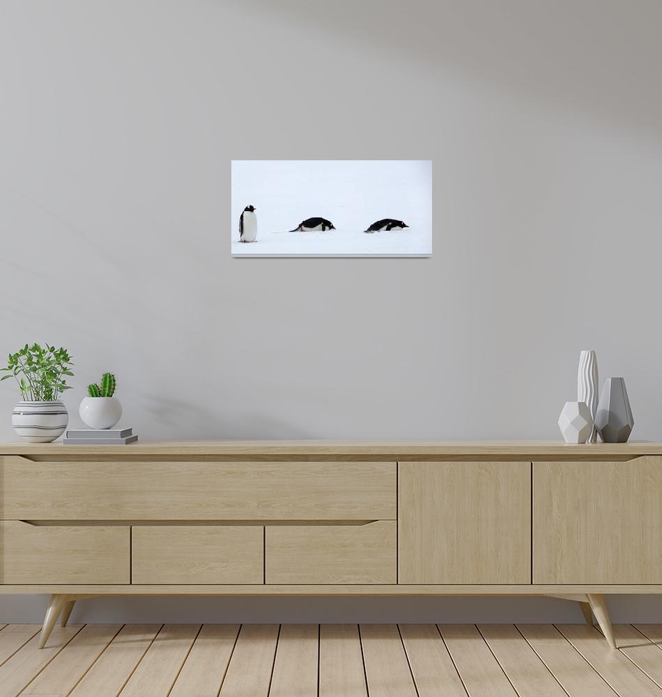"""""""Gentoo Penguins""""  by billadler"""