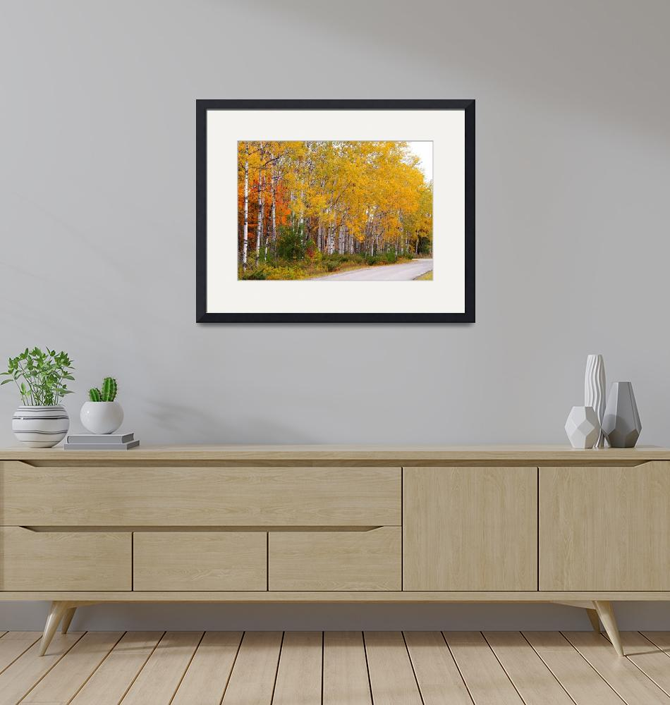 """""""Northwoods Birch""""  by RedfoxCreations"""