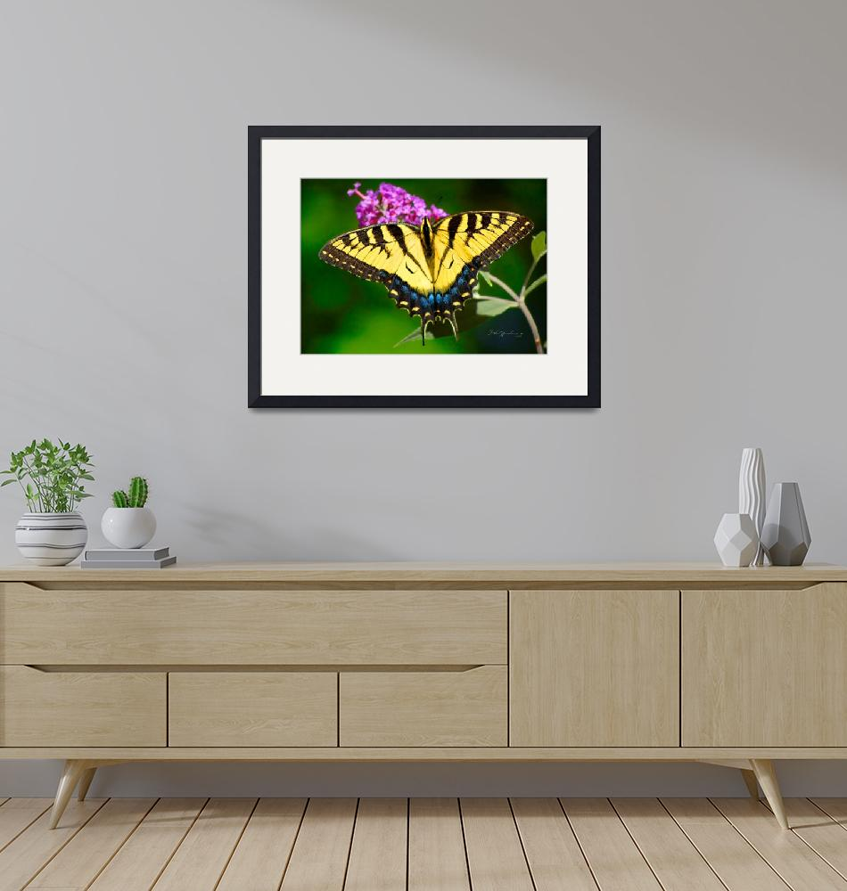 """""""Eastern Tiger Swallowtail Butterfly""""  (2013) by raBHA2014"""