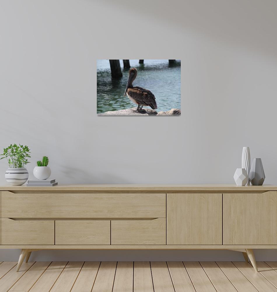 """""""Florida Pelican""""  (2014) by mpaskvan"""