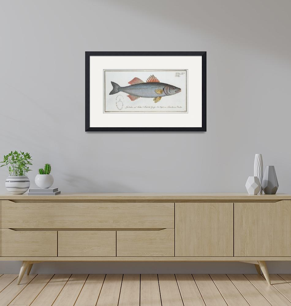 """""""Vintage Illustration of a Umber Fish (1785)""""  by Alleycatshirts"""