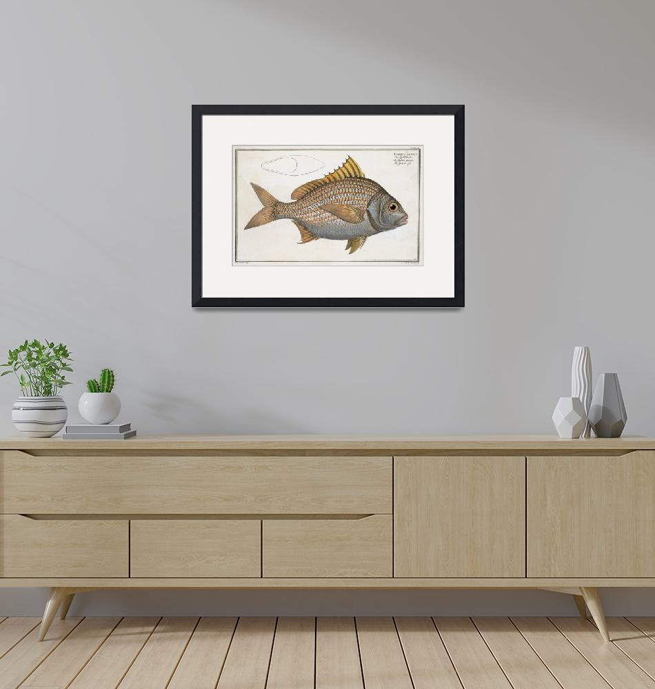 """Vintage Illustration of an Yellow-Fin Grunt (1785)""  by Alleycatshirts"