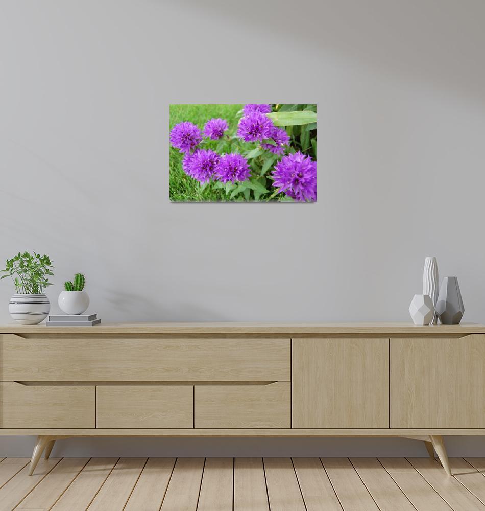 """purple flowers""  (2008) by crazyabouthercats"