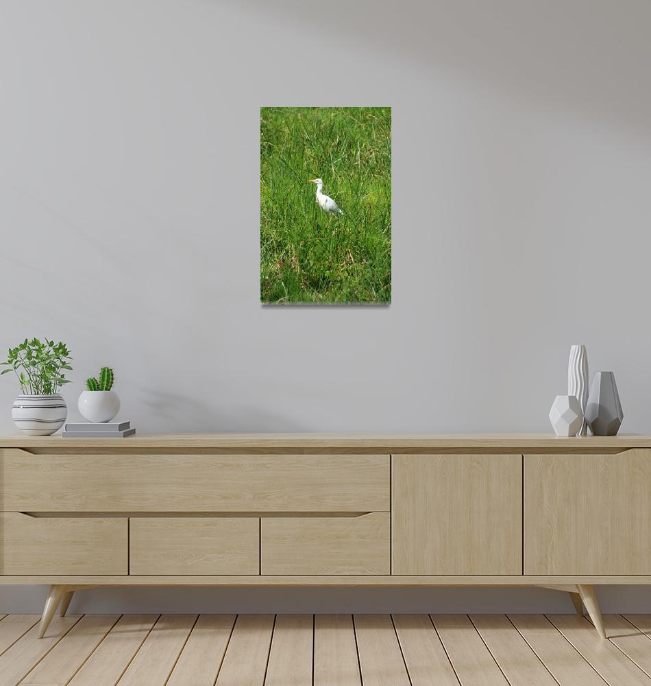 """Alert Cattle Egret in a Pasture""  (2012) by rhamm"