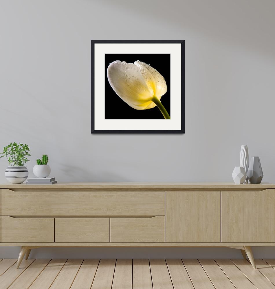 """""""Tulip""""  (2009) by Samplace"""