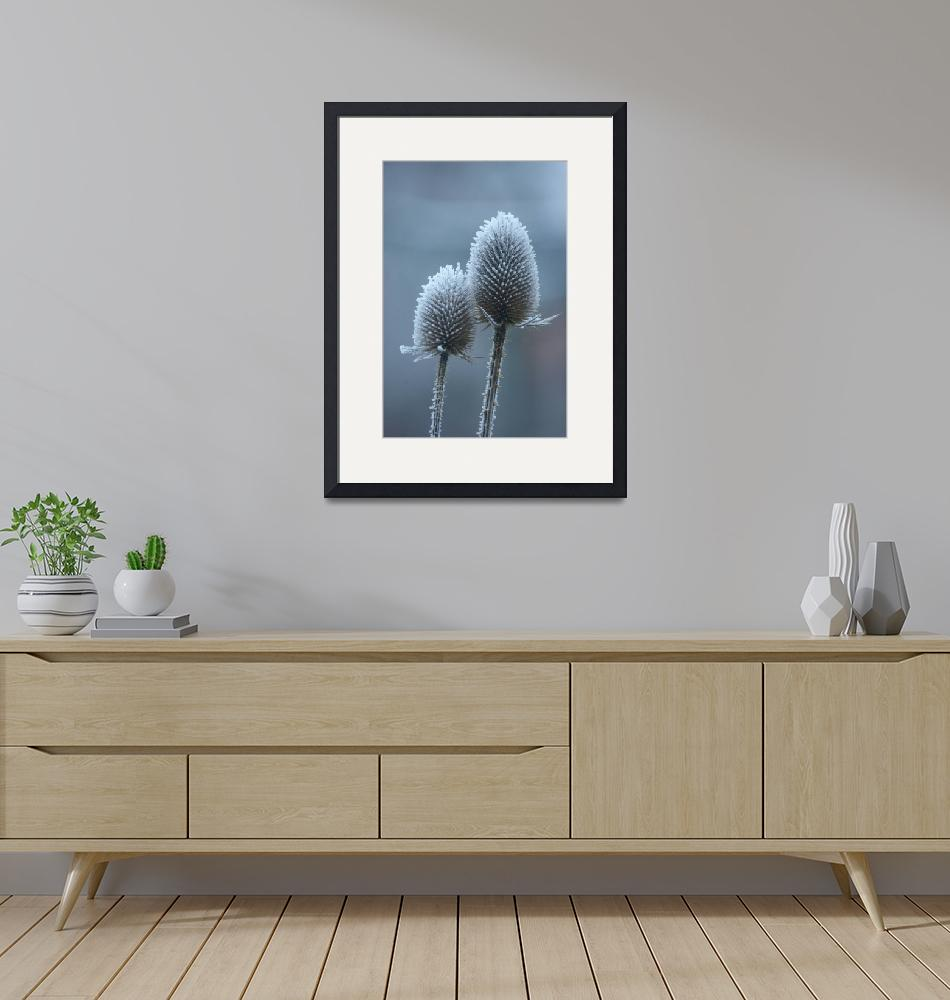 """""""Hoarfrost on thistles""""  (2009) by mellting"""