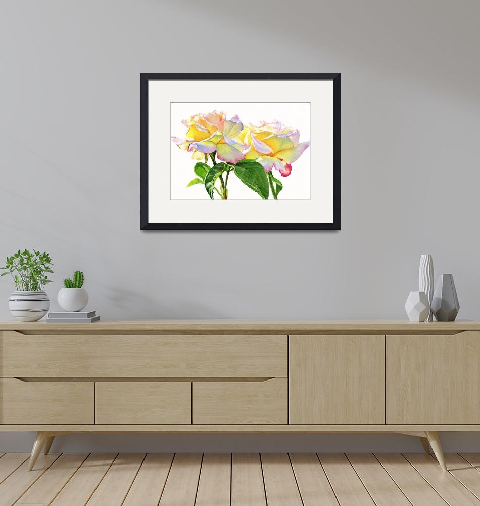 """""""Peace Roses white Background""""  (2010) by Pacific-NW-Watercolors"""