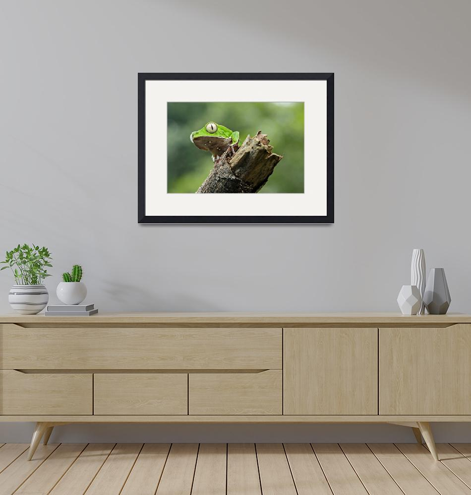 """""""White-lined leaf frog""""  (2015) by GFC_Collection"""
