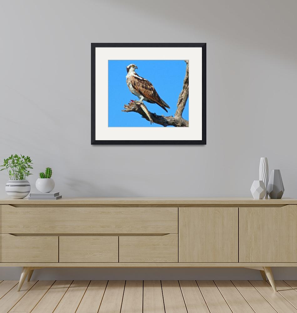 """""""Osprey with Fish""""  (2010) by shelshots"""