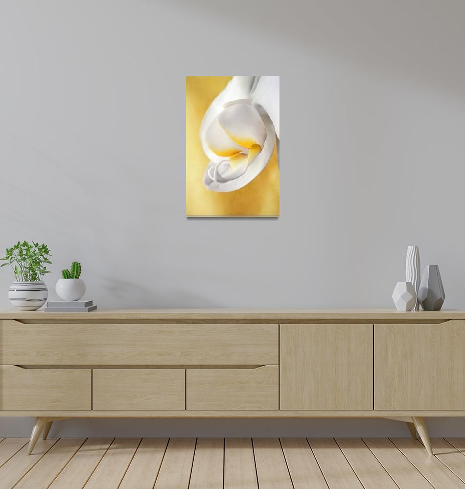 """""""White Orchid""""  (2011) by Piri"""