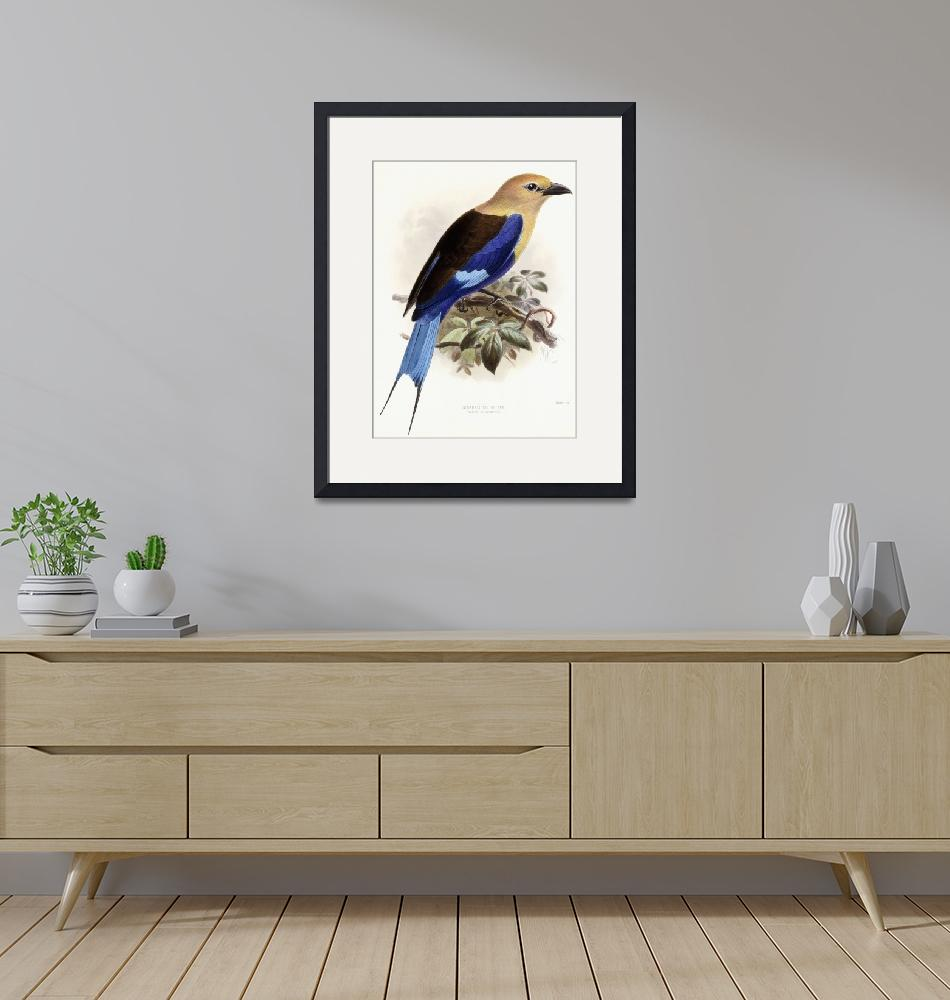 """Bluebellied Roller, 1893 (hand-coloured lithograph""  by fineartmasters"