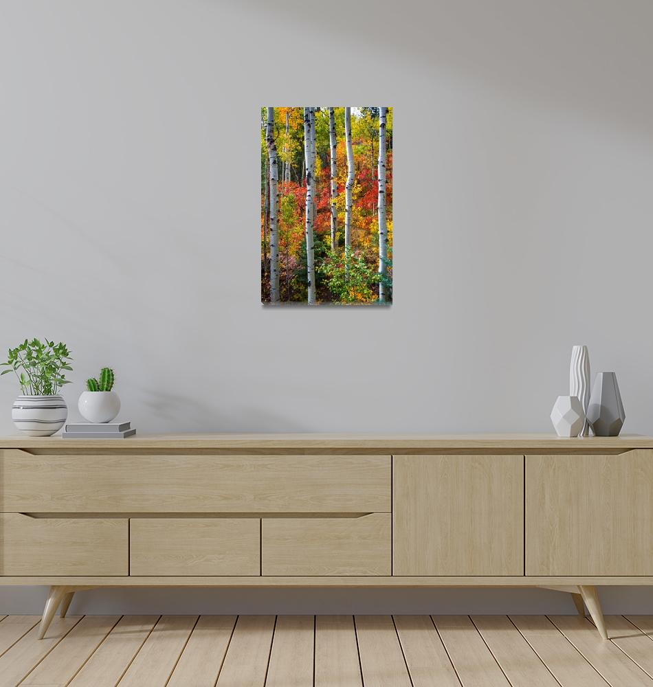 """Leaves Of Autumn by David Halpern"" (2010) by pbk"
