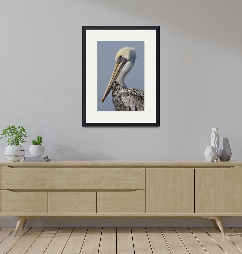 """Brown Pelican (Pelecanus occidentalis) (bird) in M""  by mikebaird"