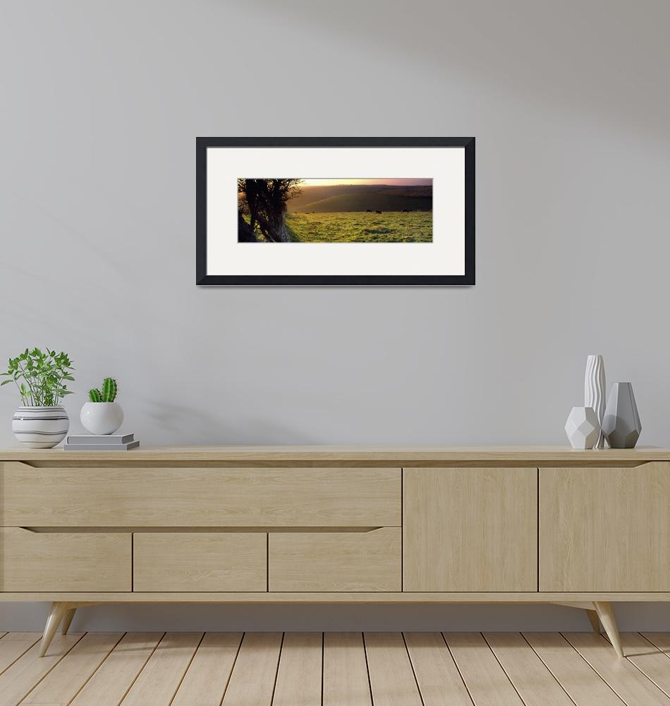 """""""Cows grazing in a field Flixton Yorkshire Wolds E""""  by Panoramic_Images"""