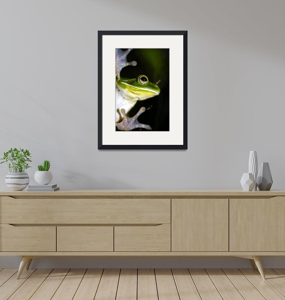 """""""Tree Frog""""  (2000) by JoaoPonces"""