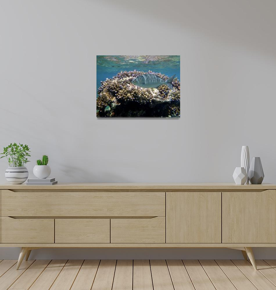 """""""Reef on Tanna""""  (2010) by DianaC"""