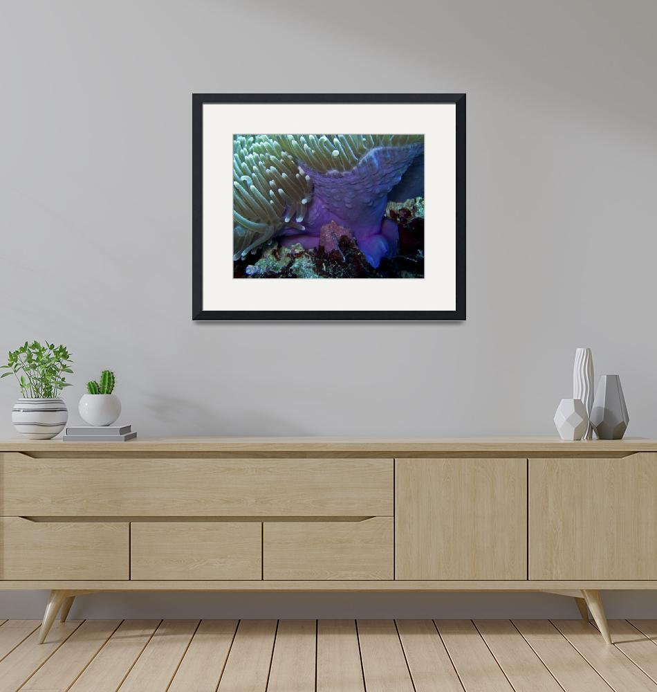 """""""Purple Anemone on Victor Coral Head""""  (2008) by Mac"""