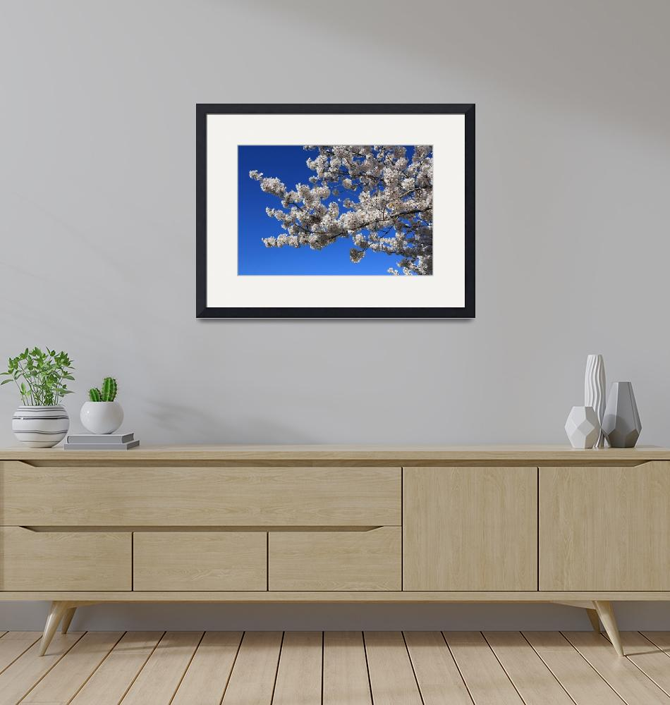 """""""White Blossoms against Blue Sky""""  (2016) by Groecar"""