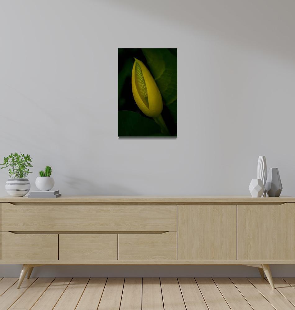 """""""Skunk Cabbage""""  (2011) by EdmundLowe"""