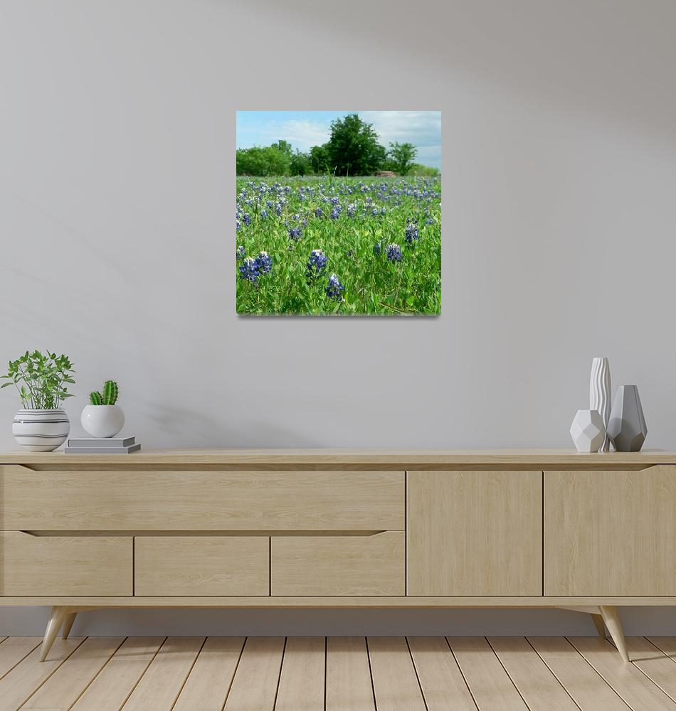 """Scenic TX Wildflowers1100063""  (2010) by rayjacque"