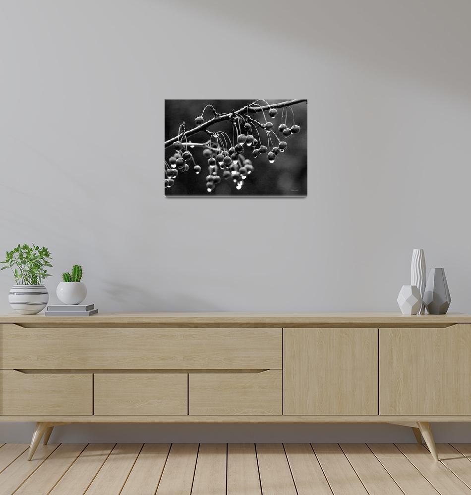 """Black Crab Apples"" (2009) by BillLinn"