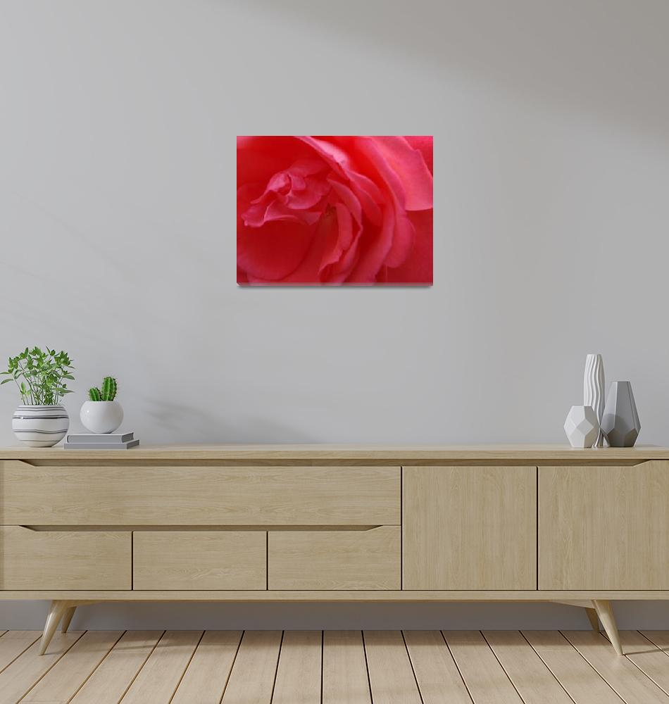 """Pink Rose           0364""  (2010) by BarbaraLin"