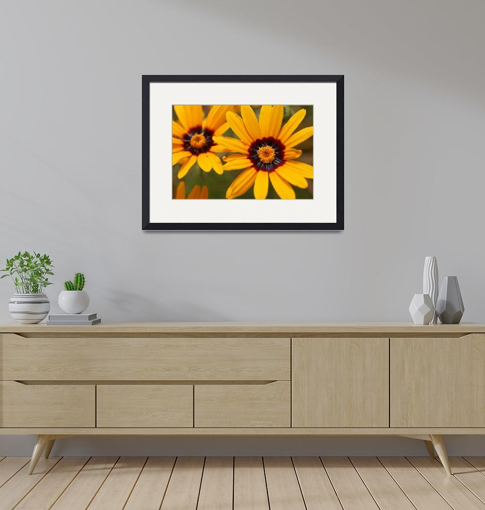 """""""Orange Daisies""""  (2008) by ispyimagination"""