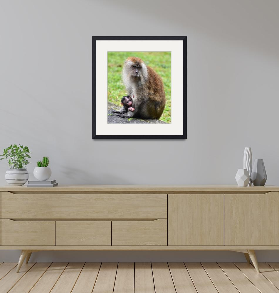 """""""Mother macaque monkey looking after her baby""""  (2019) by Mickcarr"""