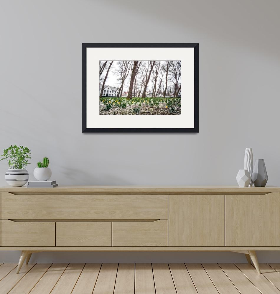 """""""Bruges Daffodils""""  (2018) by aaronchoi"""