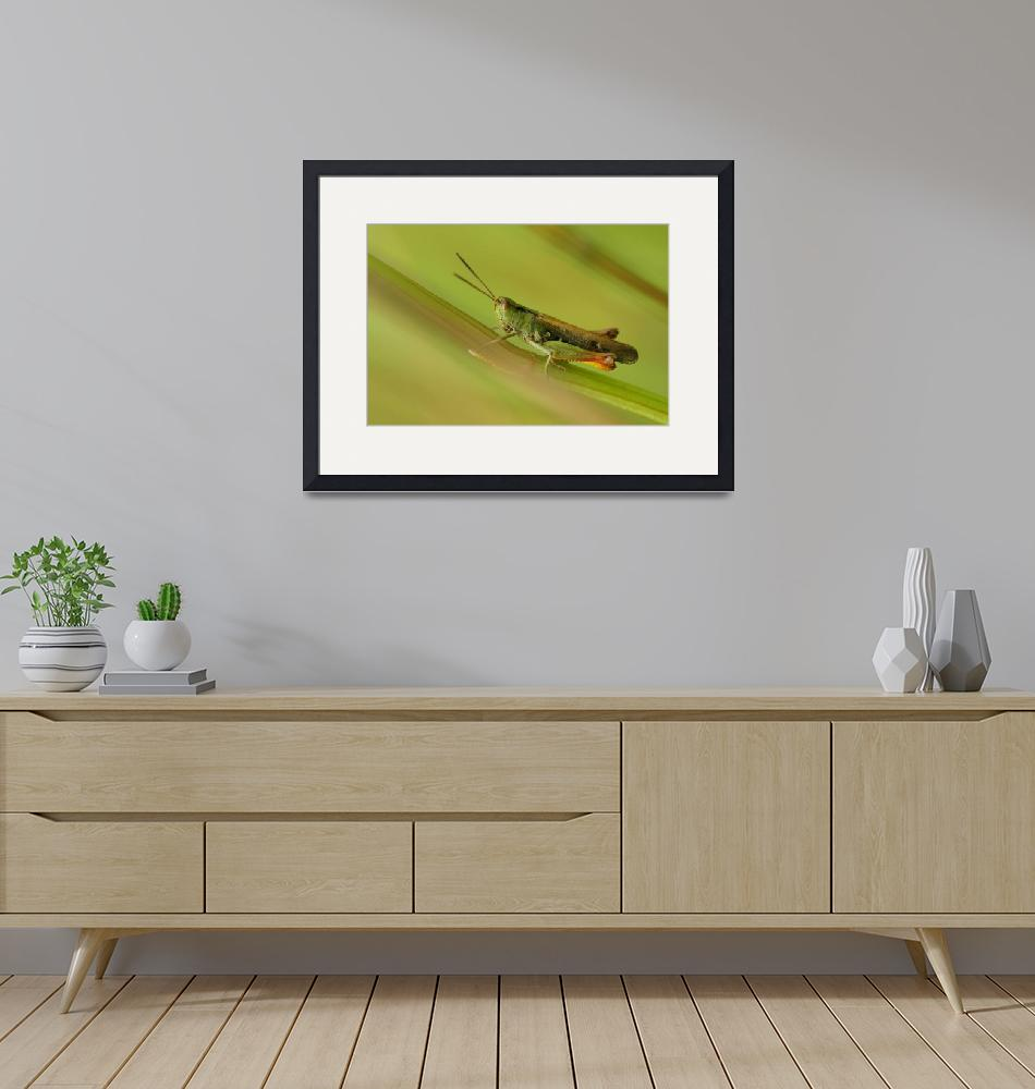 """""""Grasshopper, nature""""  (2009) by guimo"""