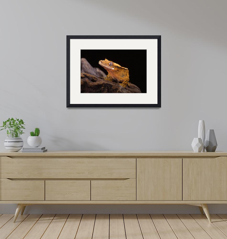 """""""Crested Gecko.""""  (2005) by roosk"""
