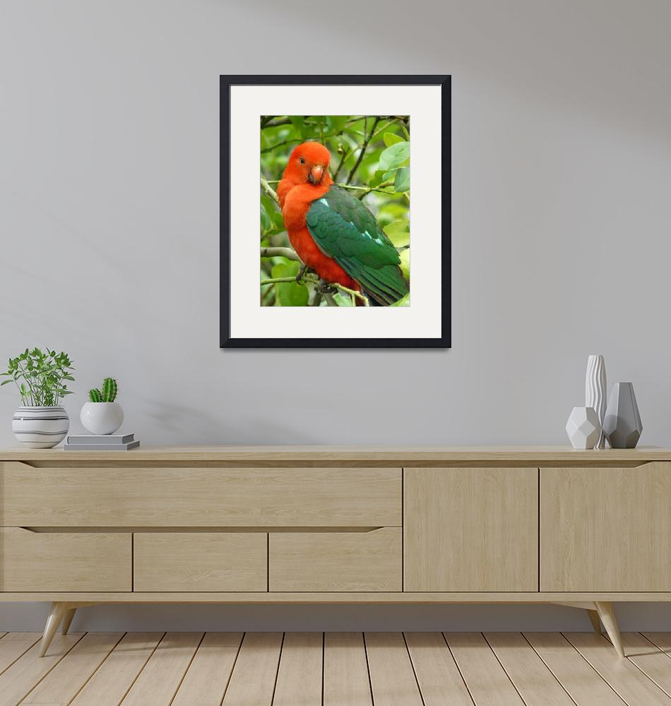 """Australian King Parrot-Male""  (2009) by paintedhorseart"