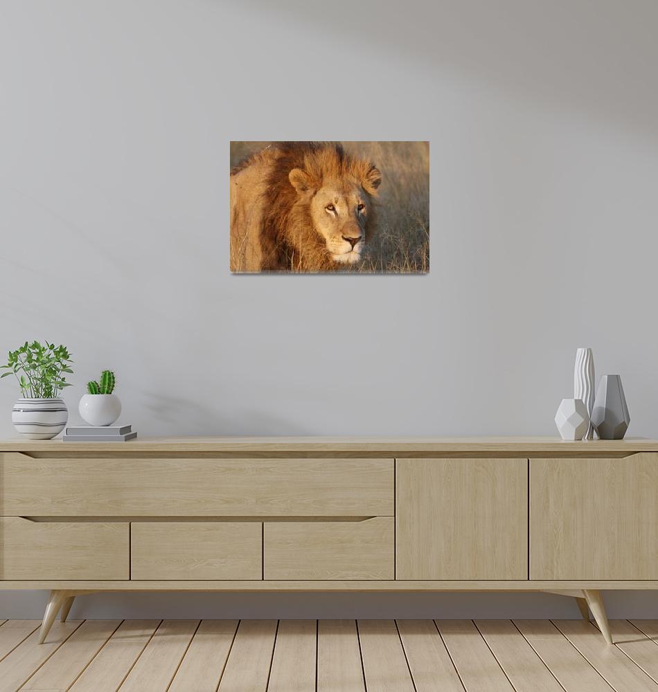 """Lion""  (2016) by poleyland"