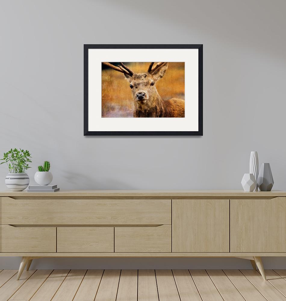 """Deer On Canvas""  (2012) by derekbeattieimages"