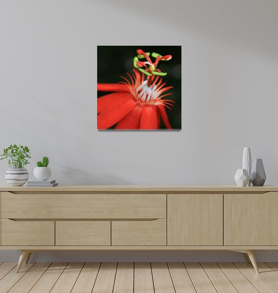 """Passiflora vitifolia - Scarlet Red Passion Flower""  (2012) by sharonmau"
