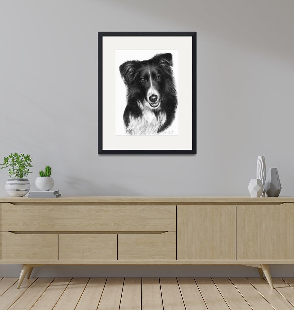 """Memorial Portrait of Malcolm, Border Collie""  (2007) by sdonley"
