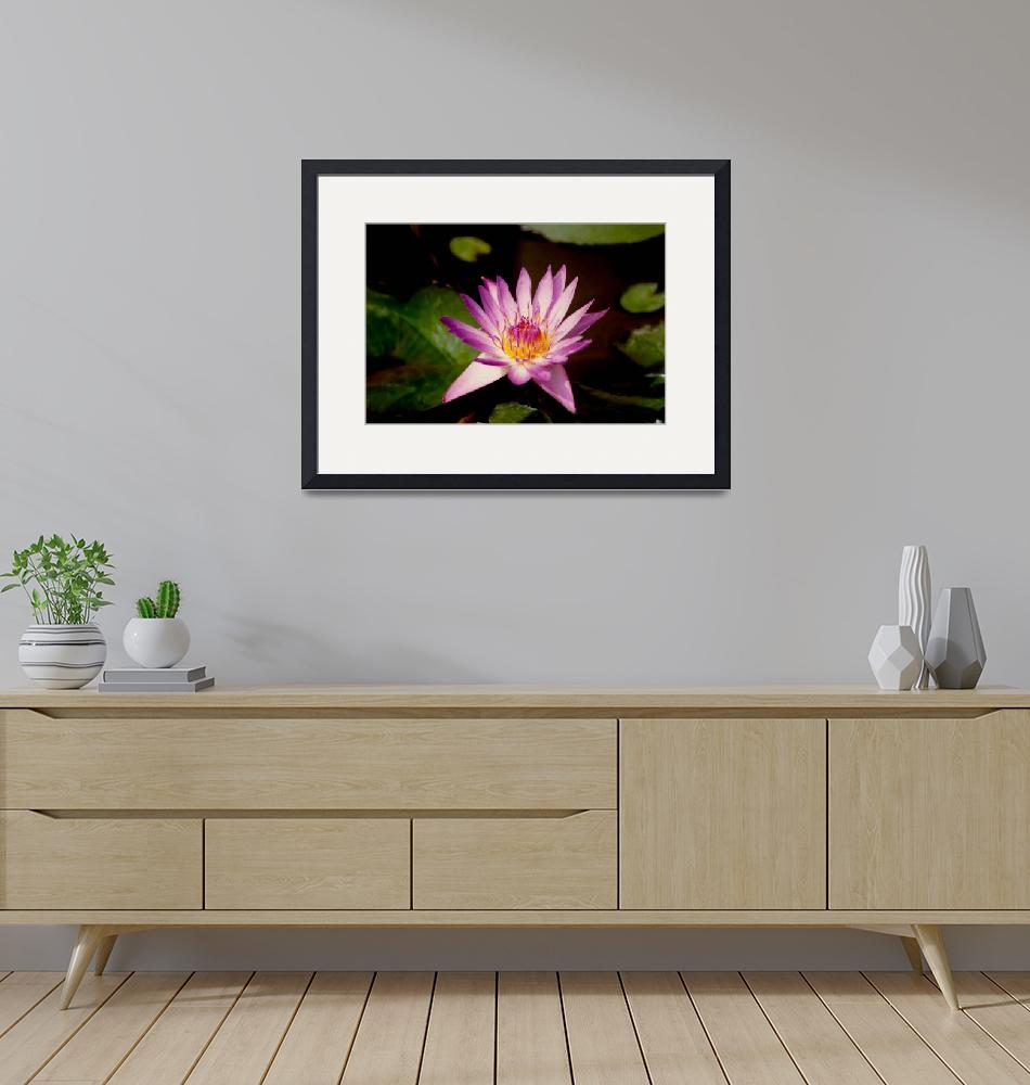 """""""Water Lily""""  (1995) by Rosebug"""