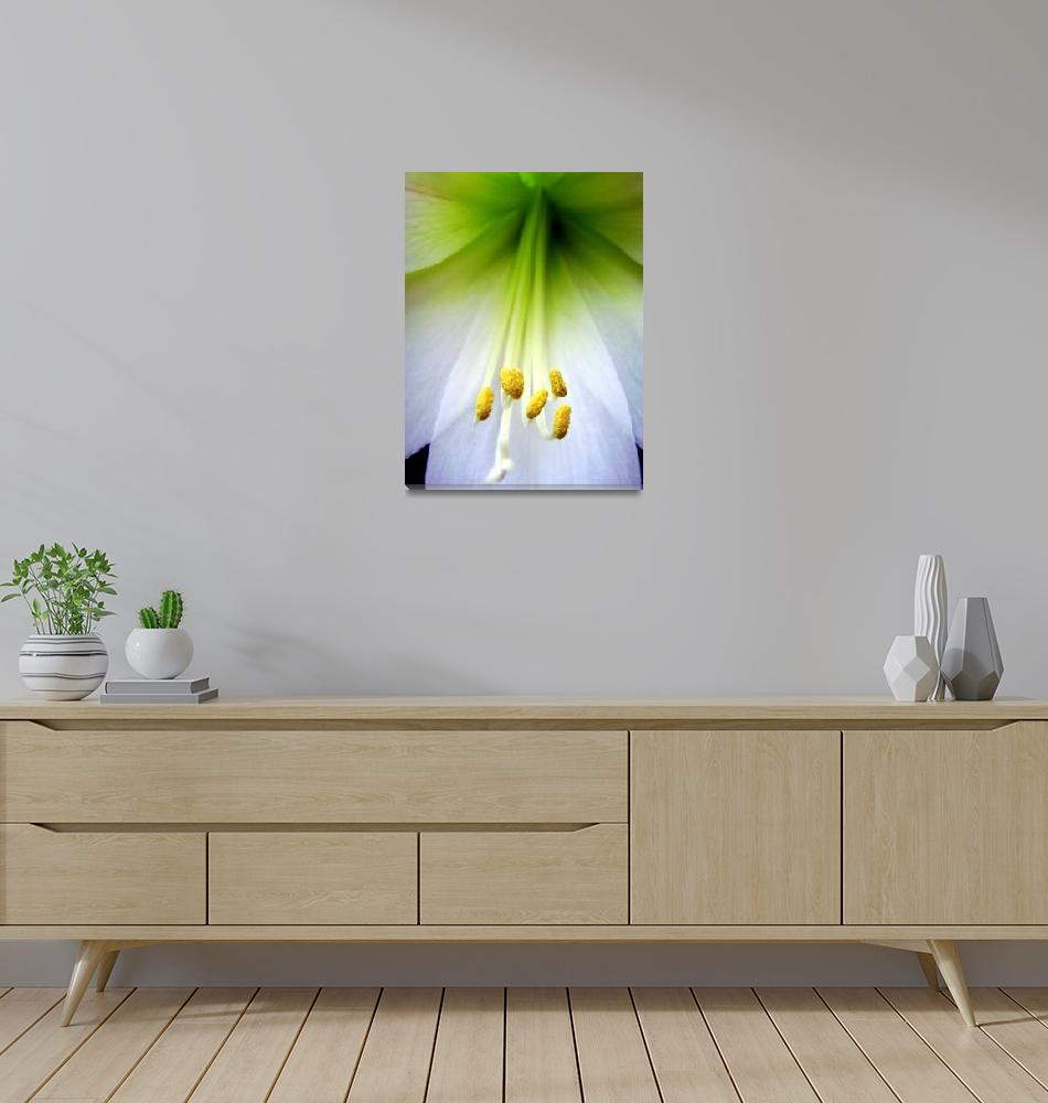 """""""White Lilly""""  (2008) by bbstudios"""