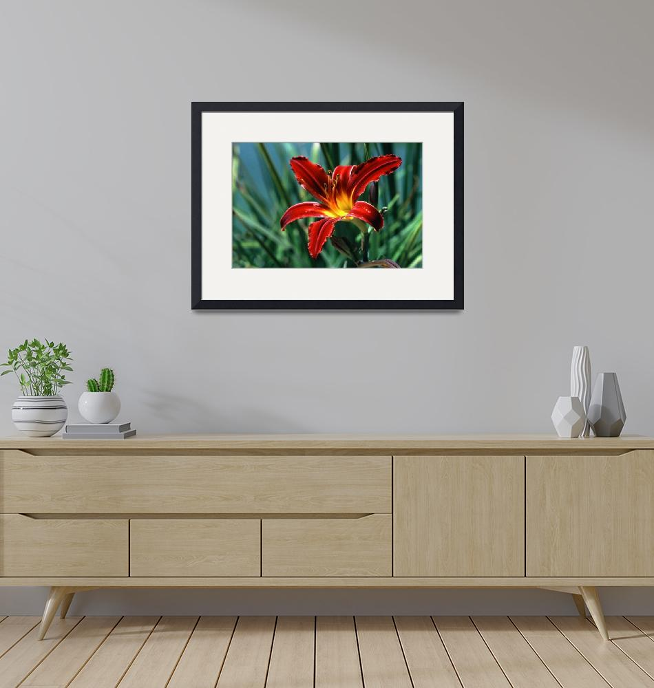 """""""Red Lily""""  (2009) by buffaloworks"""