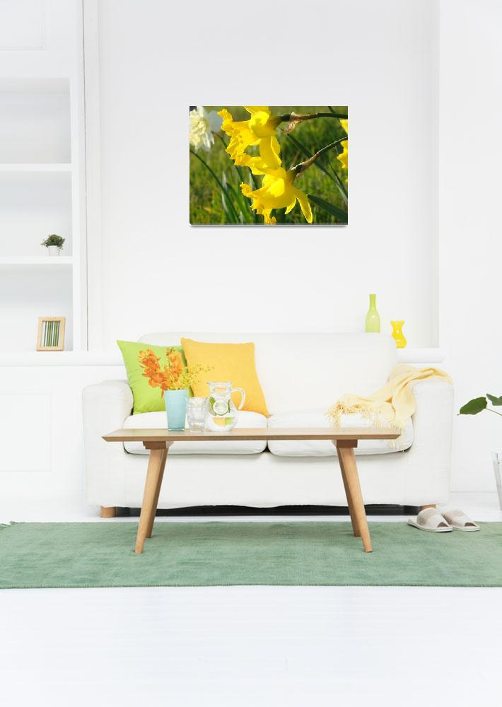 """""""Spring Glowing Sunlit Daffodils Flowers art prints&quot  (2014) by BasleeTroutman"""