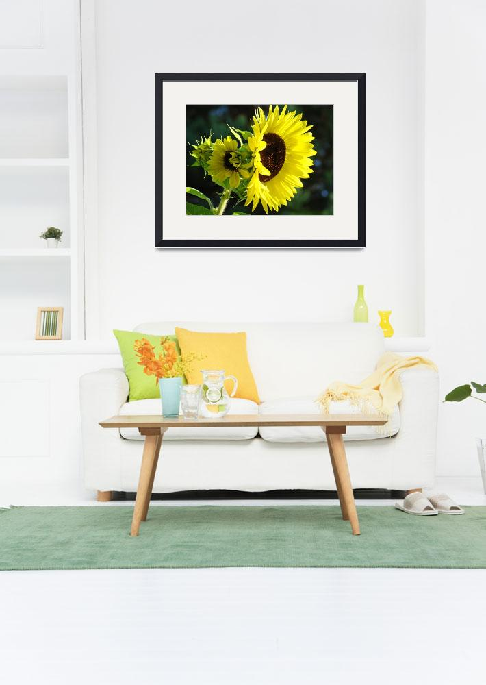 """Sunlit Yellow Sunflowers art prints Botanical&quot  (2011) by BasleeTroutman"
