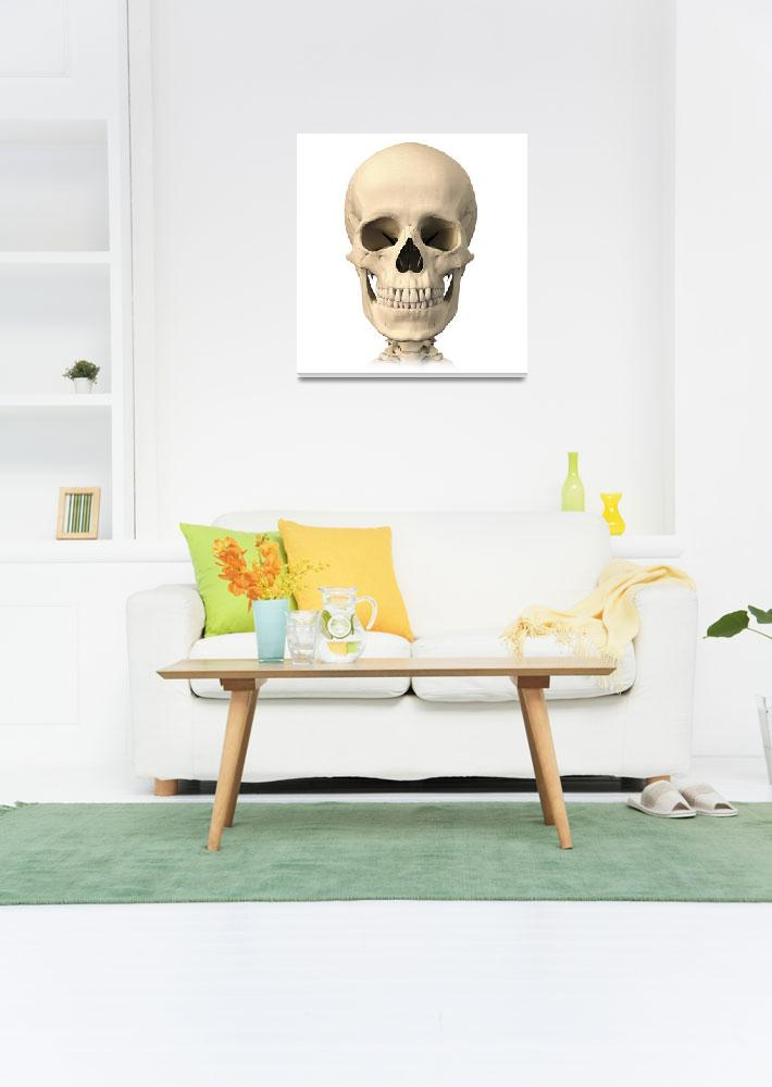 """""""Anatomy of human skull, front view&quot  by stocktrekimages"""