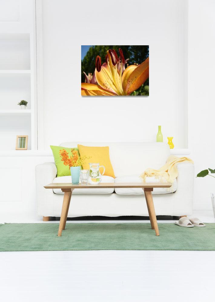 """LILY FLOWER ART Prints Lilies Orange Brown Baslee""  (2009) by BasleeTroutman"