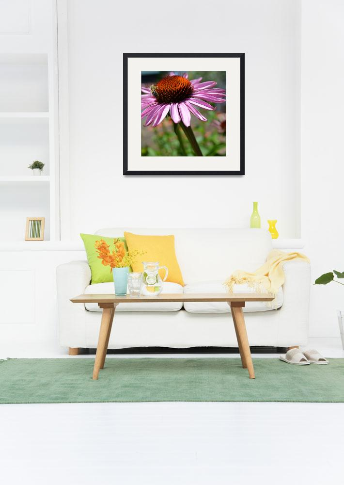 """""""Bee on a Purple Coneflower&quot  (2011) by PatriciaSanders"""