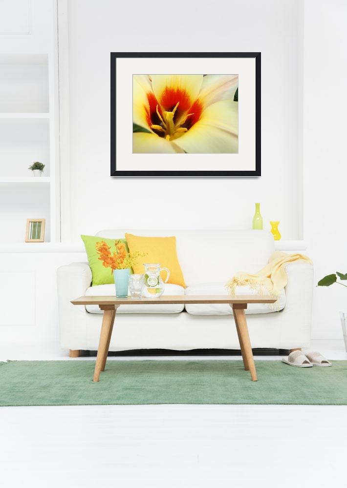 """""""Christmas gifts Tulip Flower art prints&quot  (2011) by BasleeTroutman"""