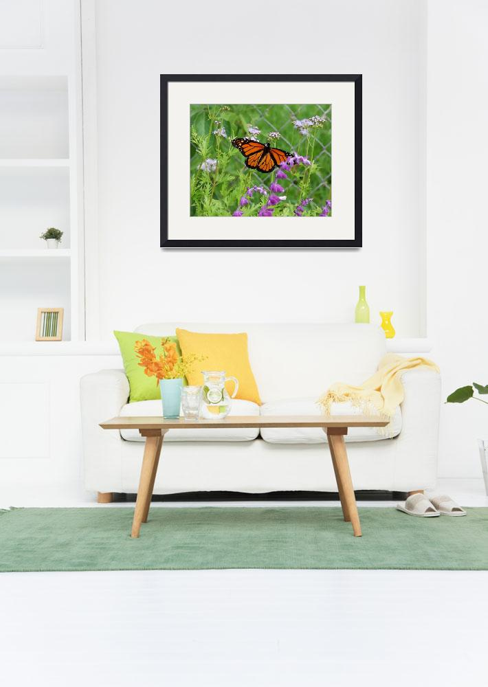 """""""Monarch Butterfly-8x10&quot  by LindaWolff"""