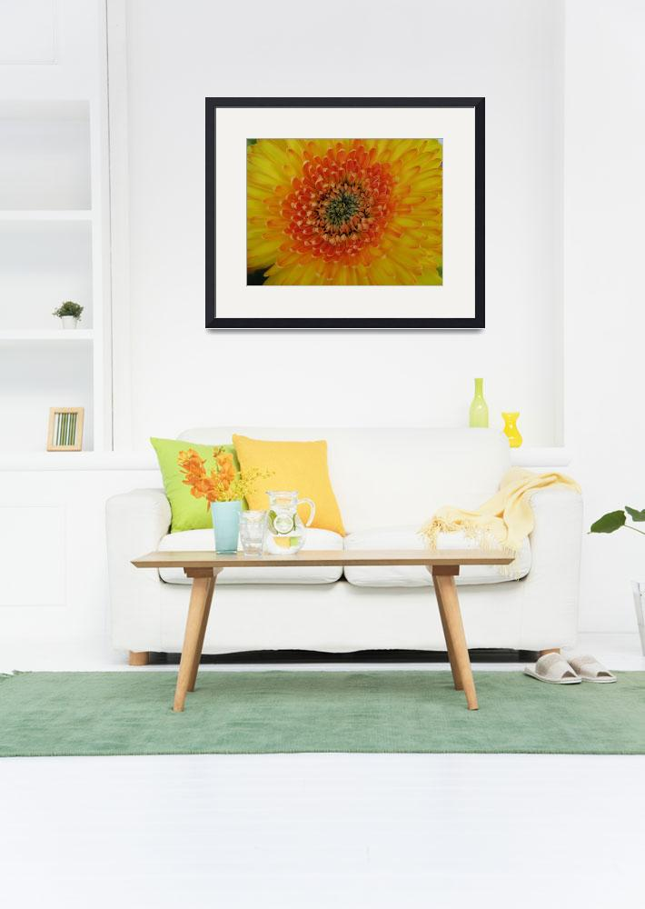 """Yellow Gerbera Daisy""  (2008) by ardentgarden"