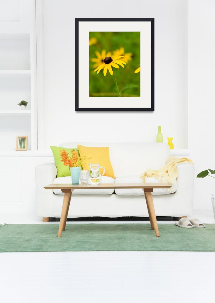 """""""Lovely Black-eyed Susan""""  by tricia"""