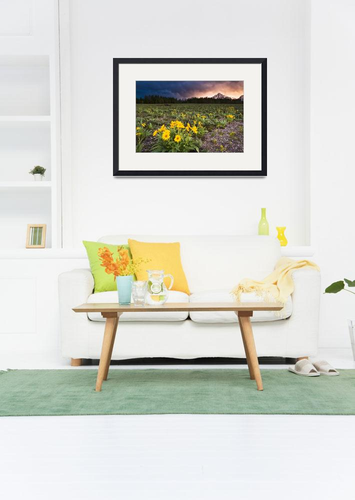 """""""Balsamroot Wildflowers and Stormy Sunset&quot  (2011) by cavaroc"""
