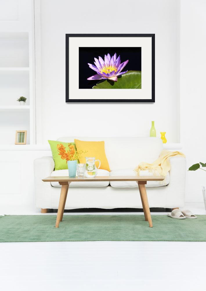 """""""Lavender Water Lily 3&quot  (2009) by FordLou"""